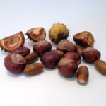 可愛いフクロモモンガのベビー、餌の種類や食事の回数は?