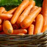 フクロモモンガの餌は昆虫や野菜?おすすめは?