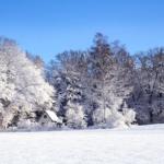 冬場のフクロモモンガは冬眠状態になる?
