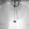フクロモモンガ 風呂 頻度