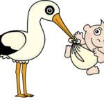 フクロモモンガの繁殖と、繁殖できる年齢、と繁殖の方法について
