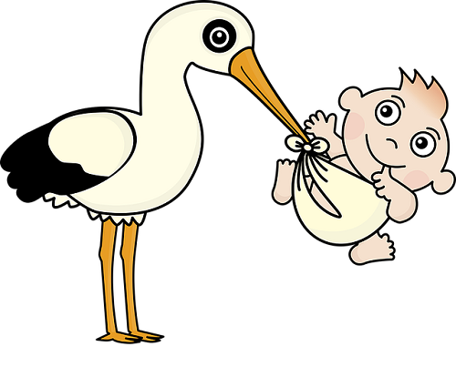 フクロモモンガ 繁殖 年齢 方法